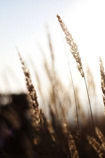 In the Fields by Adrian Sandor