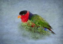 Black-capped Lory von Betty LaRue