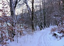 Winterwanderung von Heidrun Carola Herrmann