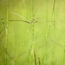 Green von Neil Overy