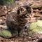 Wildcat-kitten-img-0231