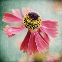 Helenium 1 by Neil Overy
