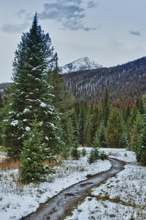 First snow in the Rocky mountains forest.  von Irina Moskalev