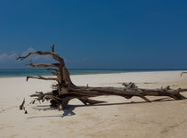 Dead Tree on Diani Beach by safaribears