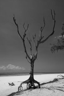 Dead Tree on Diani Beach von safaribears