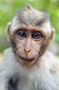 Ubud-monkey-1