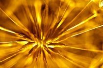 Dandelion Heart by Marc Garrido Clotet
