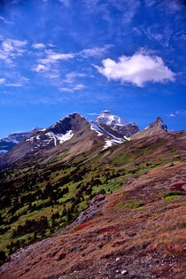 Mount Athabasca 511 von Patrick O'Leary