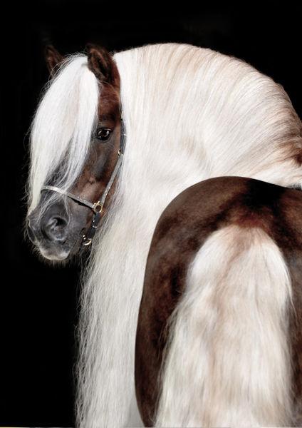 Titelseite-pferdeerleben-kalender-2012