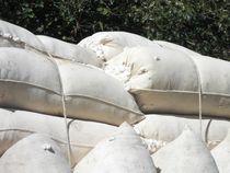 Baumwolle in Säcken frisch vom Feld. Cotton von Anke Franikowski
