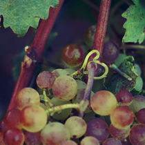 Heart & grapes by Nathalie Knovl