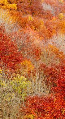Natural Fall Fire  von Maciej Markiewicz
