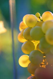 sunset grape von Nathalie Knovl