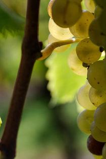 Transparent grapes by Nathalie Knovl
