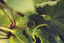 Tendril with leaves by Nathalie Knovl