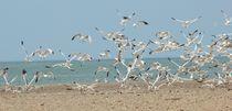 seagull flock by Colleen Duschen