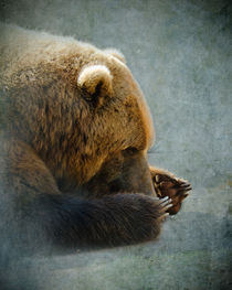 Grizzly Bear Lying Down von Betty LaRue
