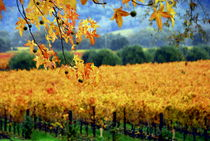 FALL IN NAPA by Brian  Leng
