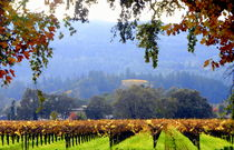 Napa California field of Grape Vines von Brian  Leng