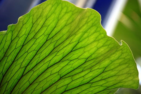 Green-leaf-vains-2