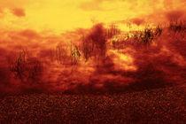 RED GRAS by Peter Bundrück