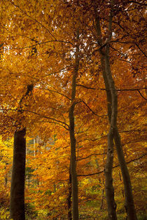 the rich colors of fall by dayle ann  clavin