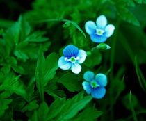 in blue by Alicja Bzdak