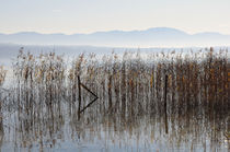 Starnberger See bei Bernried 1 by Frank Rother