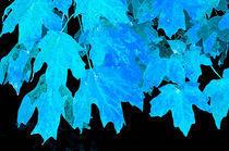 Blue Leaves by Betty LaRue