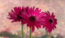 Gerbera Daisies von Betty LaRue