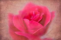 Pink Rose by Betty LaRue