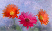 Three Gerbera Daisies von Betty LaRue