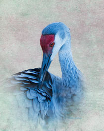 Portrait of a Sandhill Crane by Betty LaRue