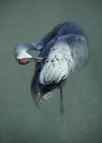 Standing Sandhill Crane von Betty LaRue