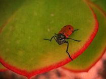 Red Beetle by pahit