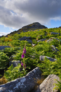 Sheeps Tor, Dartmoor, England von Craig Joiner