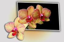 Orchidee Out of Bonds von Anja Abel
