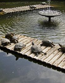 Happy turtles von cristina  dantas