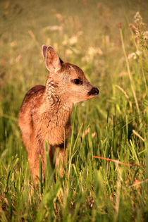Bambi von tr-design
