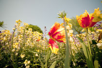 Flowers by jpphotographie
