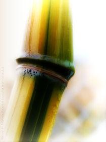 Bamboo von mimulux