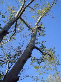 trees by Tania Santos