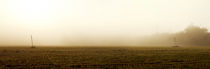 Felder aus Gold von Quirin Lippl