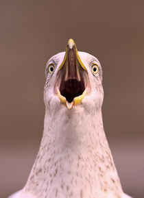 A frustrated seagull by Prodromos Antzoulis