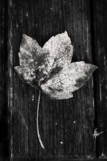 Leaf by Alexander Tenghamn