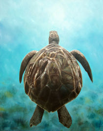 Sea Turtle von Renee Reznicsek
