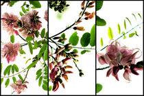 Robinia - Triptych von Kitsmumma Fine Art Photography