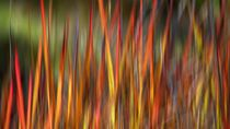 Wild Grass by Kitsmumma Fine Art Photography