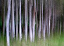 Paperbarks von Kitsmumma Fine Art Photography