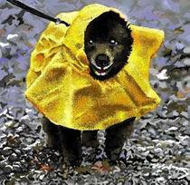 Rain Dog by Lynn DeBeal